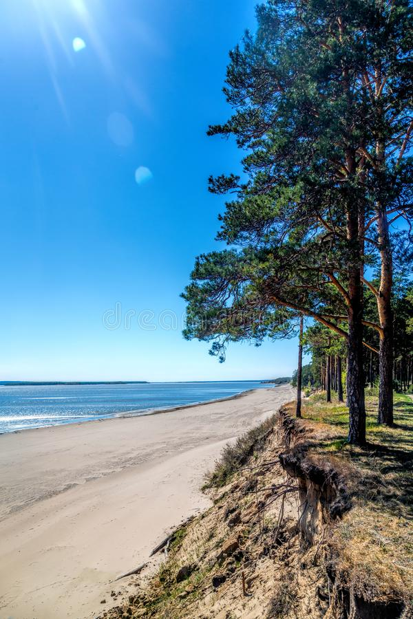 Green forest on the shore of the lake, sand on the shore. Summer royalty free stock photo