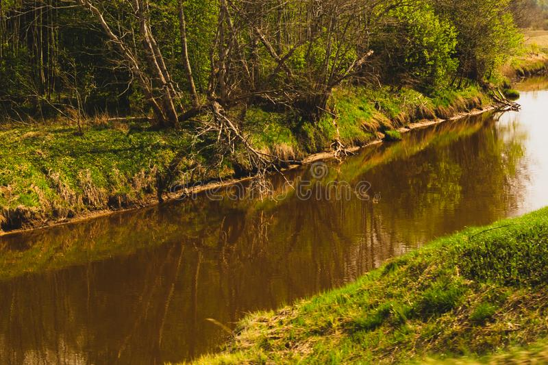 Green forest with small river landscape royalty free stock photography