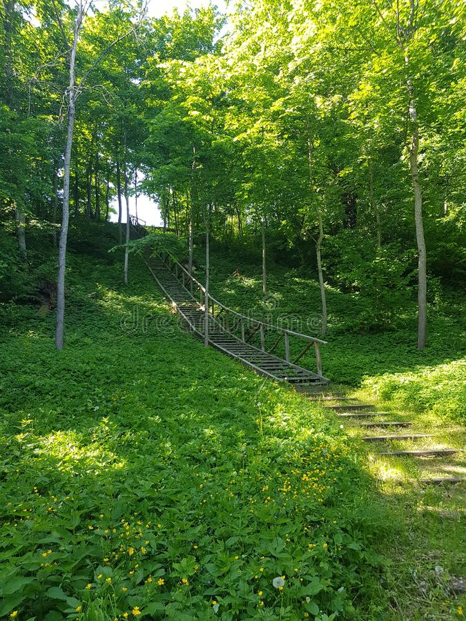 Green forest with stairs royalty free stock photos