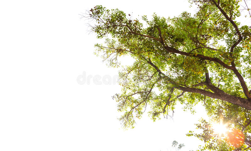 Green forest with sunlight royalty free stock photo