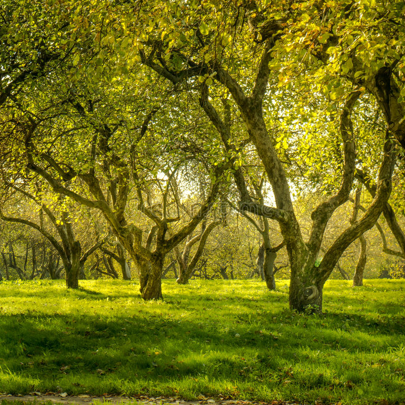 Download Green forest stock photo. Image of season, autumn, landscape - 36598508