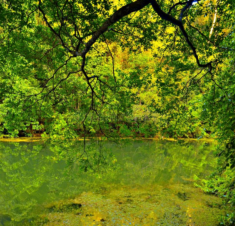 Free photo: Tranquility - Forest, Green, Nature - Free