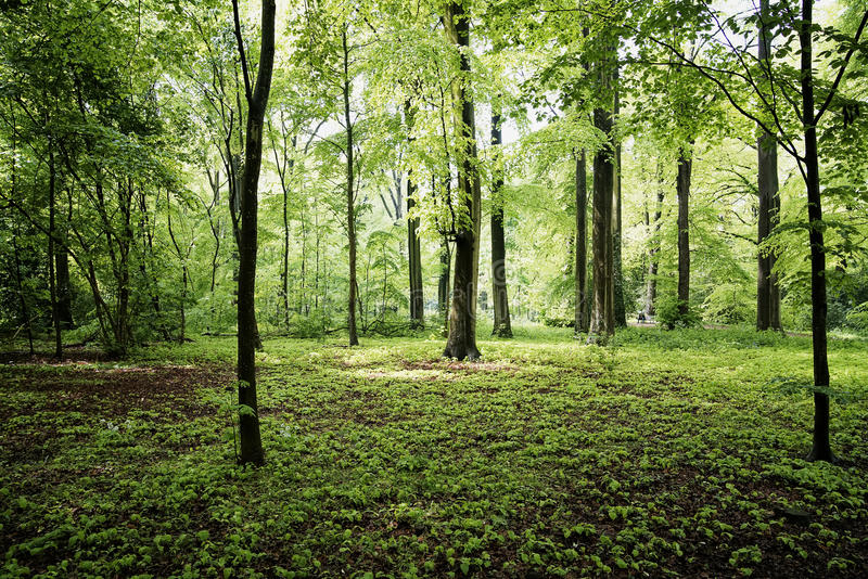 Green forrest in summer europe stock photos