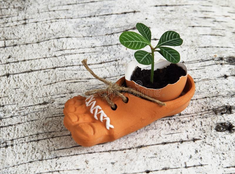 Green fragile tender sprout in eggshell in brown ceramic shoe with jute braid on birch bark. Symbolic concept of life stock images
