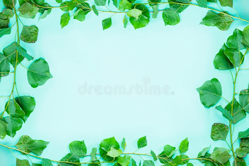 Green frame composed of fresh green poplar branches and leaves. stock photos