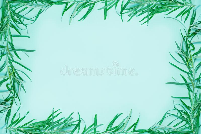 Green frame composed of fresh green  branches and leaves. Background and copy space image symbolizing ecology, nature, stock photos
