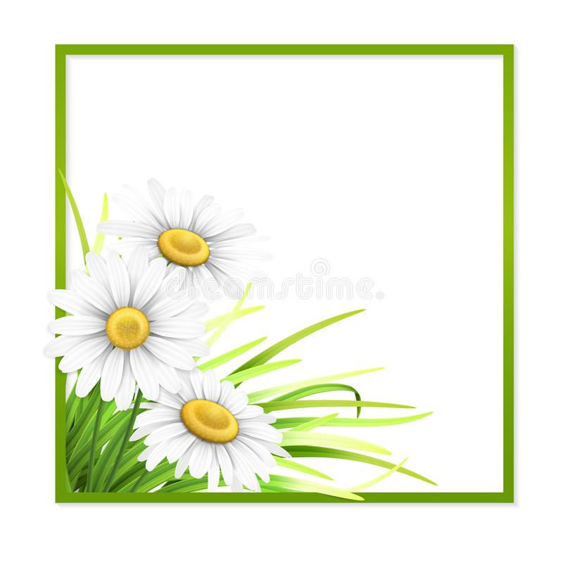 Green frame with grass and daisies in corner. stock illustration