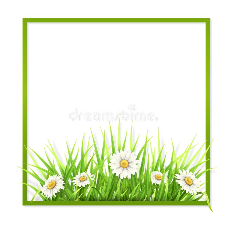 Green frame with grass and daisies stock illustration