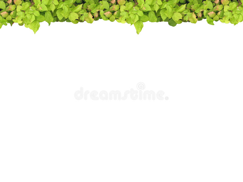 Green frame top stock image