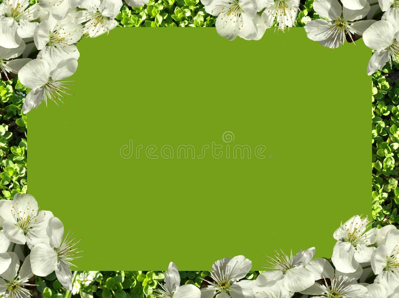 Frame of flowers. stock photography