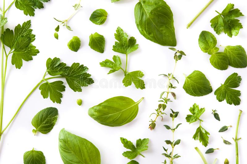 Green fresh aromatic herbs pattern isolated on white background. Top view royalty free stock photos