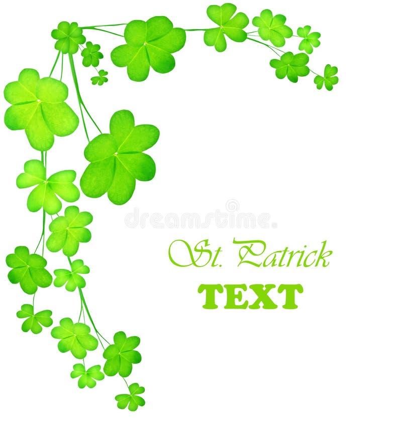 Green fresh clover border stock images