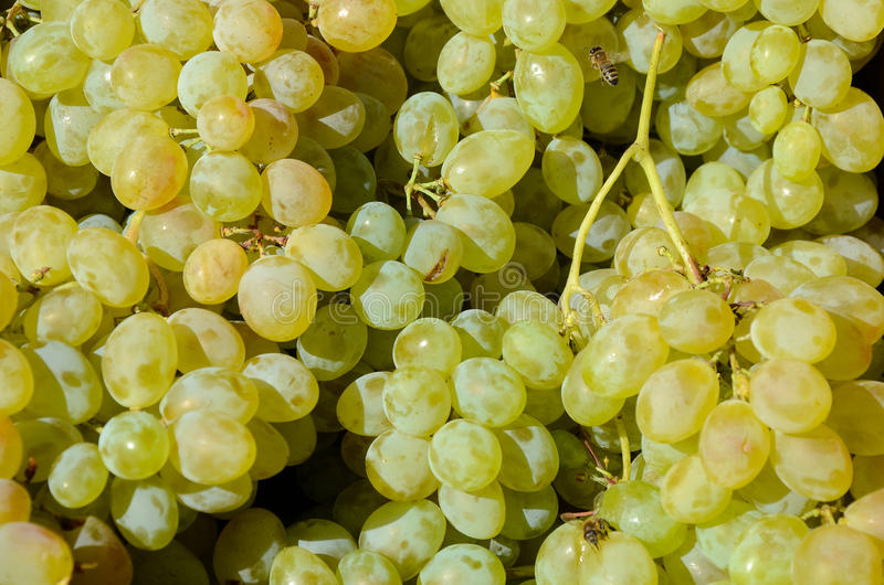 Green fresh grape background texture stock photography
