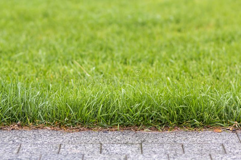 Green fresh grass growing along asphalt gray path, texture for background. Green bright sunny lawn, garden or backyard pattern and stock image