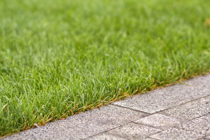 Green fresh grass growing along asphalt gray path, texture for background. Green bright sunny lawn, garden or backyard pattern and. Texture background royalty free stock photography