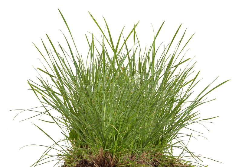 Green fresh grass meadow isolated stock photography