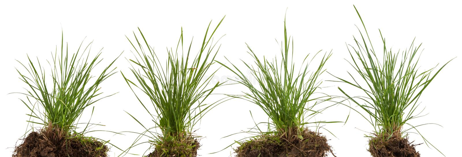 Green fresh grass meadow isolated. On white backgound stock photo