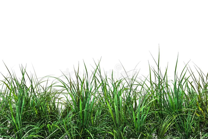Green fresh grass naturally on isolated white background, 3d rendering royalty free illustration