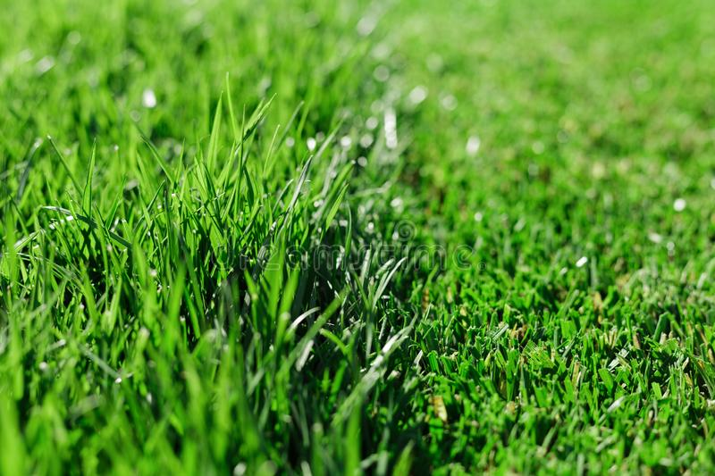 Green fresh grass. Partially cut grass lawn. Difference between perfectly mowed, trimmed garden lawn or field for sports, golf and royalty free stock image