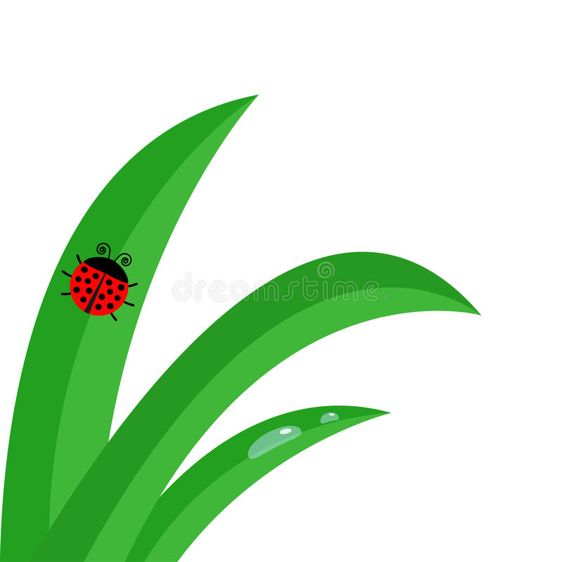 Green fresh grass stalk close up. Water morning drop set. Ladybug Ladybird insect. Cute cartoon baby character. Garden nature deco stock illustration