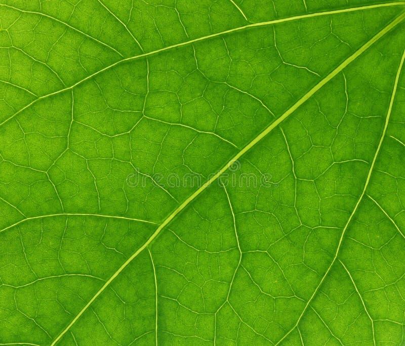 Green fresh leaf texture stock photo