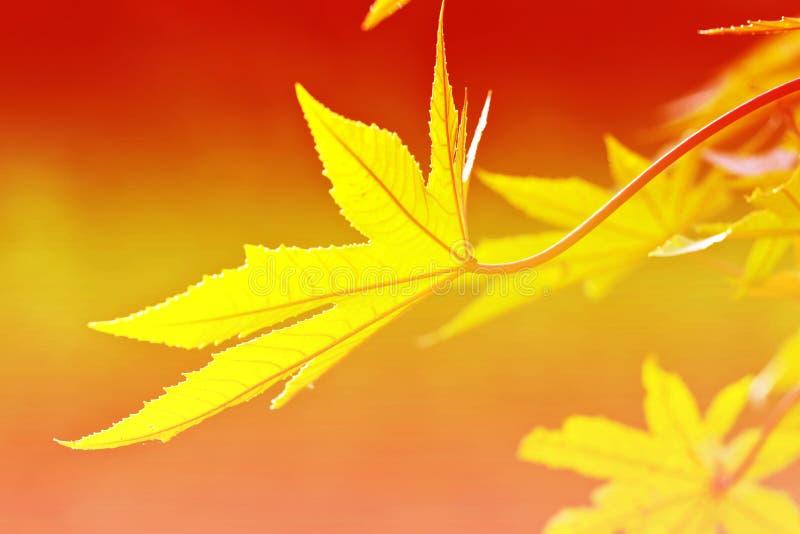 Green fresh leaves stock images