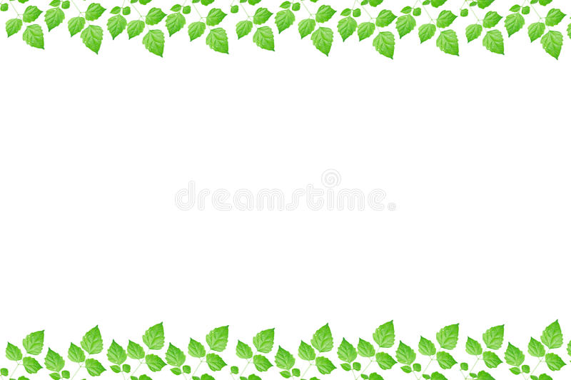 Download Green Fresh Leaves Frame Royalty Free Stock Images - Image: 25971129
