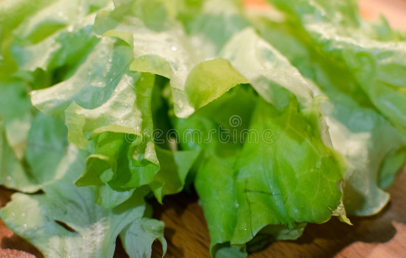 Green and fresh lettuce macro on the wooden board stock photos