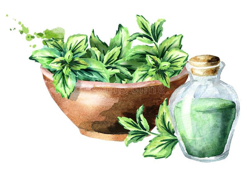 Green fresh mint in the wooden bowl and bottle with mint essential oil. Watercolor hand drawn illustration. stock illustration