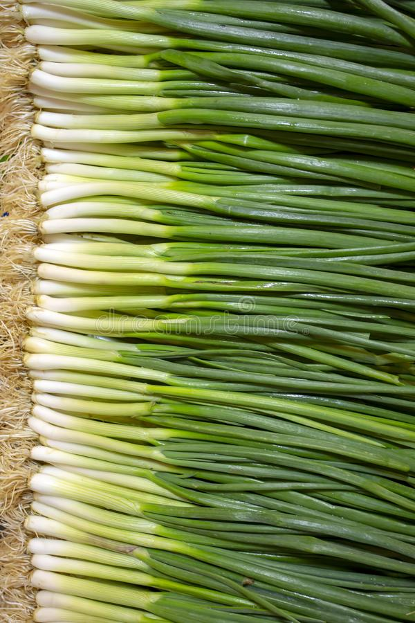 Green fresh onion texture background. Food concept photo.  royalty free stock photos