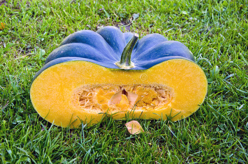 Green fresh pumpkin half slice on garden grass royalty free stock photos