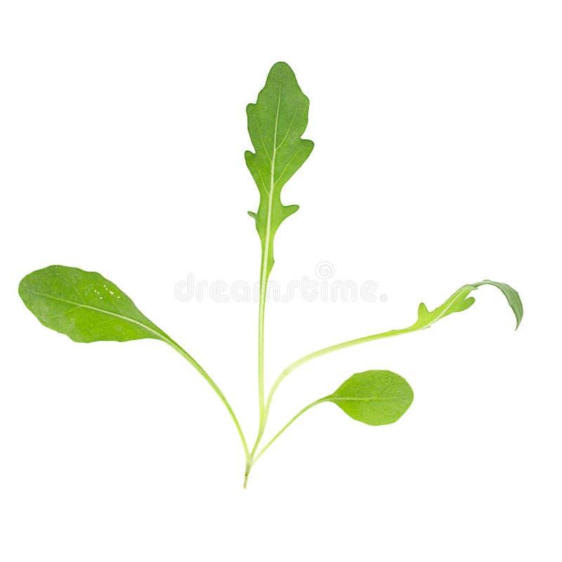 Green fresh rukola isolated on white background stock images