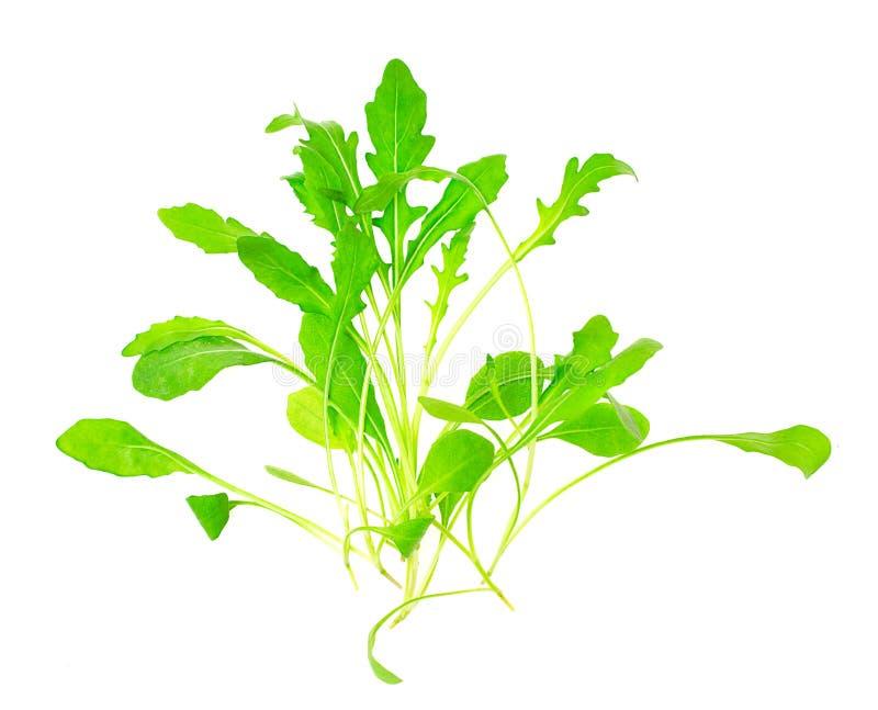 Green fresh rukola isolated on white background royalty free stock image
