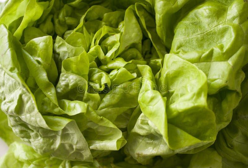Green fresh salad close-up stock image
