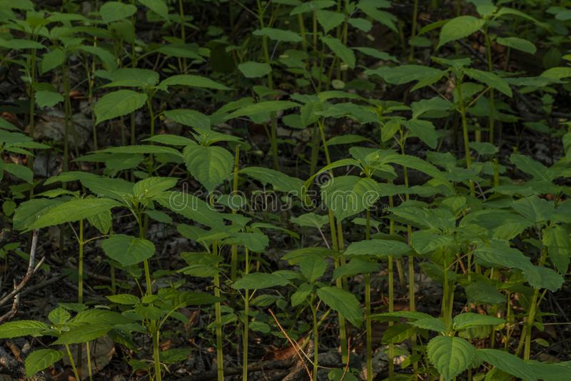 Green fresh young plants in dark spring forest royalty free stock photography