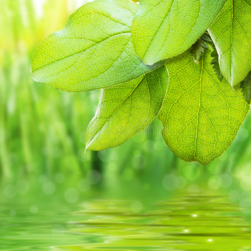 Free Green Freshness Royalty Free Stock Photos - 14028268