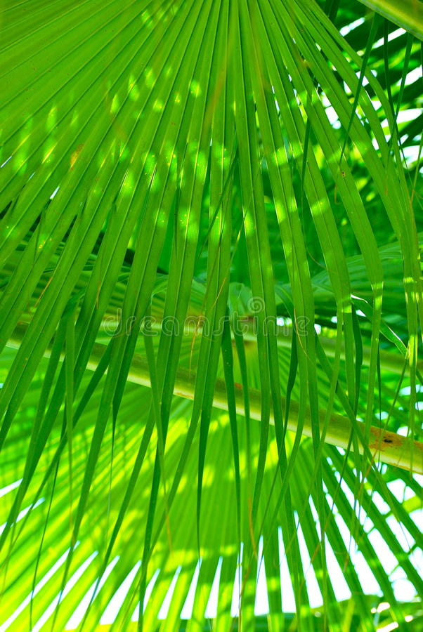 Download Green fringe palm leaves stock photo. Image of daytime - 18717092