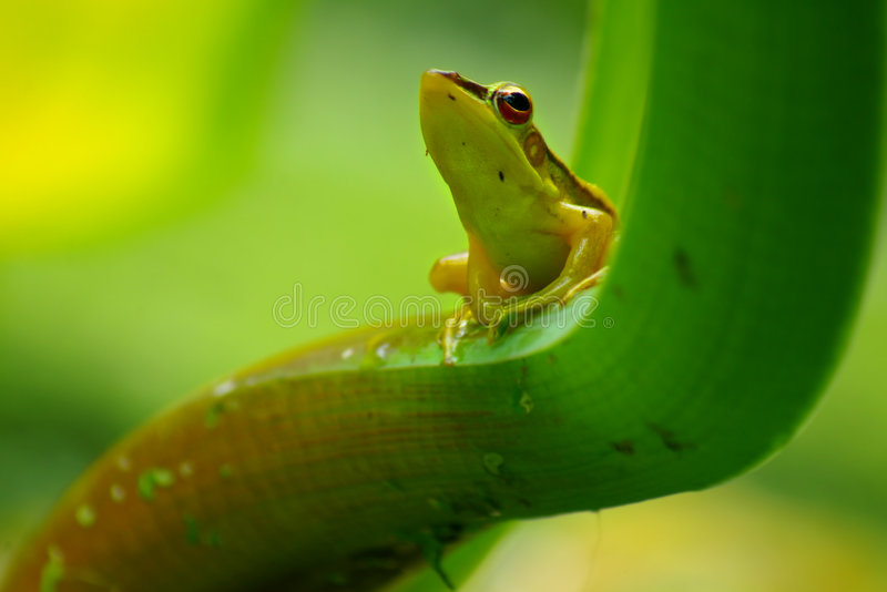 Download Green frog stock image. Image of close, environment, wild - 1729239