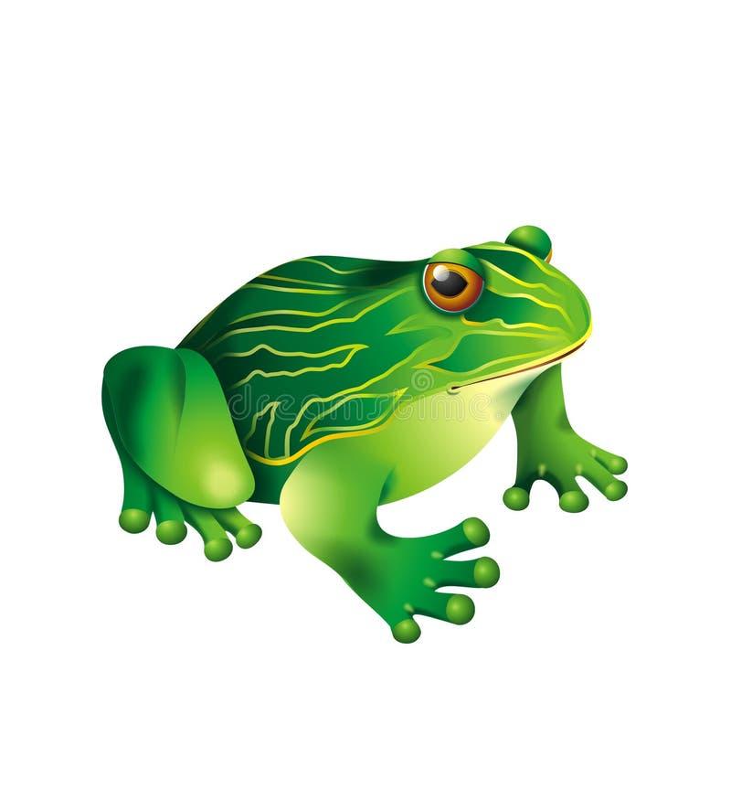 Free Green Frog Royalty Free Stock Photo - 6475265