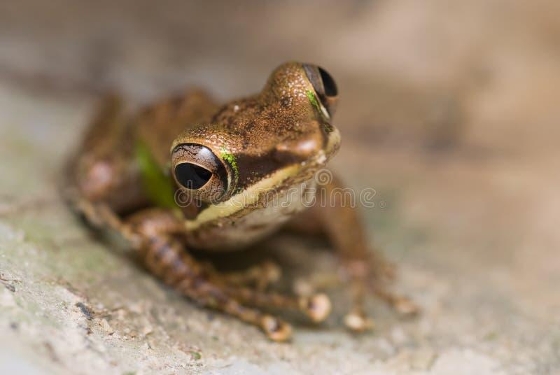 A green frog stock photos