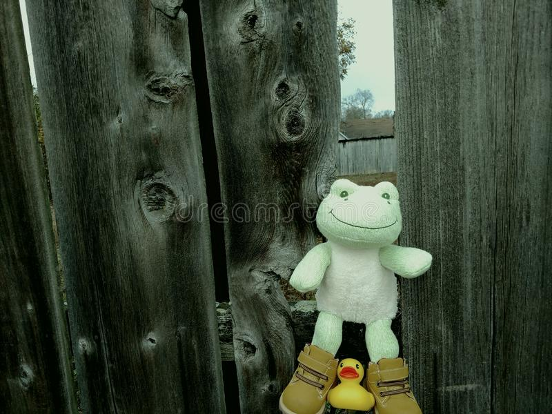 Green frog in fence stock photography