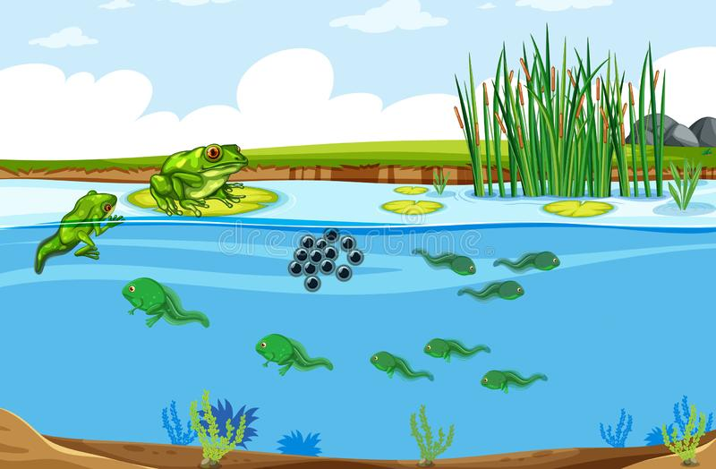 Green frog life cycle scene. Illustration royalty free illustration