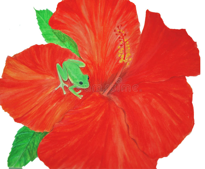Green Frog Art on Scarlet Hibiscus watercolor stock photography