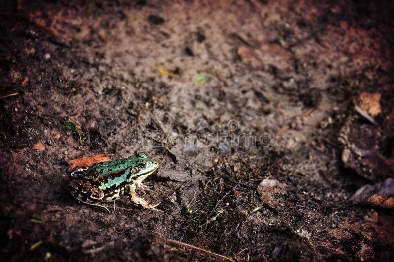 Green Frog Sitting On Damp Earth Free Public Domain Cc0 Image