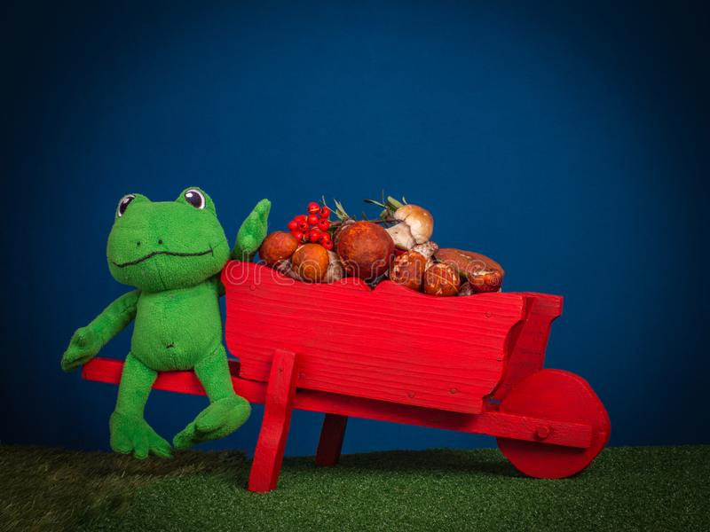 Green frog sitting on a red wheelbarrow with real mushrooms. Au stock photography