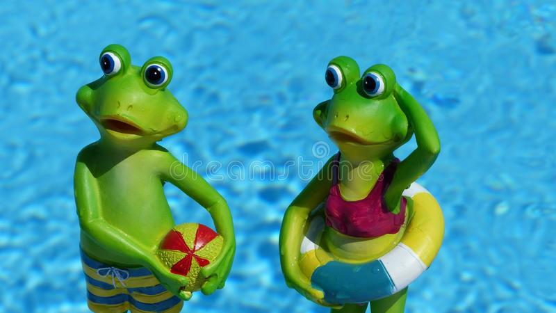 Green, Frog, Vertebrate, Amphibian royalty free stock images