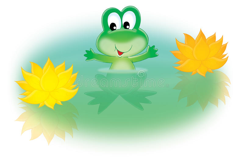 Green frog and water lily