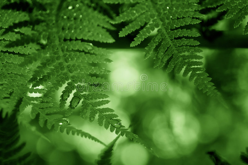 Green frond frame stock photography