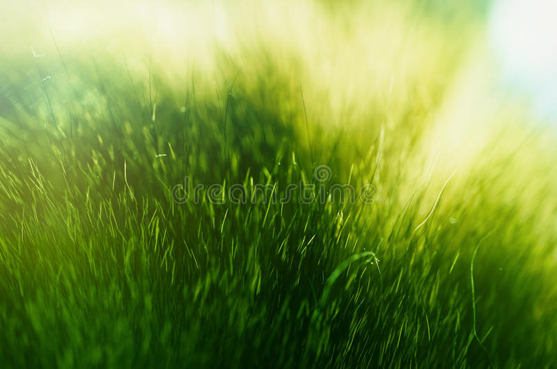 Green fur texture. An abstract texture with green cat fur on the sunlight looking like a grass or moss stock photos