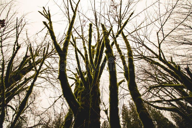 Green furry trees royalty free stock photo